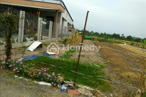 Bán vườn xoài 2500m2, đường Tân Liễu, Bình Chánh chỉ 3 triệu/m2