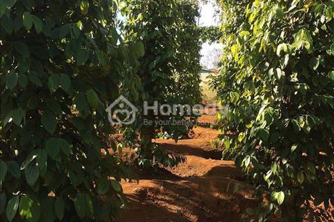 Bán đất sau trường Phan Bội Châu, xã Đắk Nia, thị xã Gia Nghĩa
