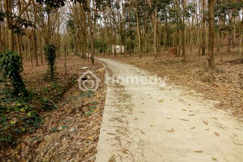 Bán 1,7ha đất Tiến Thành - Đồng Xoài - Bình Phước