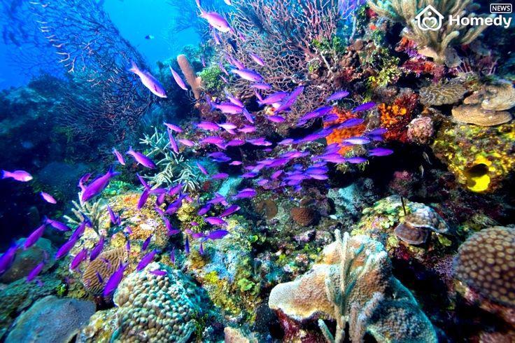 belize barrier reef belize