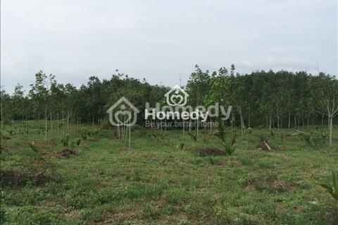 Bán gấp trang trại 230000m2 tại Hàm Tân, Bình Thuận bao gồm 3820 cây dừa & 2000 cây Mẫn Cầu Na