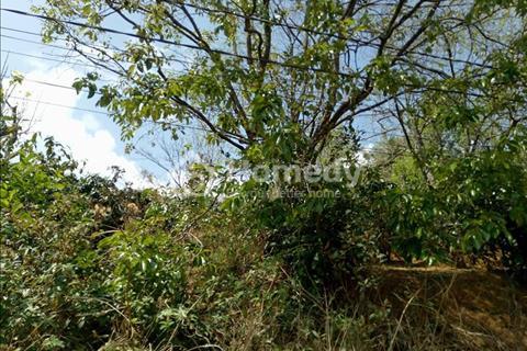 Bán đất nông nghiệp chuyển đổi được có view đẹp hẻm xe hơi đường Khe Sanh, Phường 3, Đà Lạt