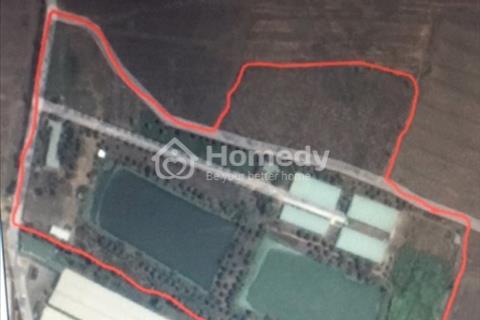 Trang trại nuôi heo trong vùng quy hoạch, chuồng lạnh tiêu chuẩn CP