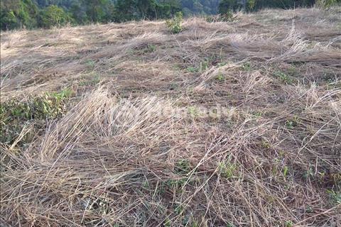 Cần bán 11 hecta đất nông nghiệp, địa thế đất đẹp