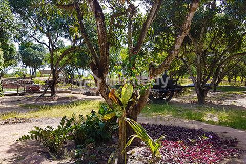 Cần sang nhượng trang trại cách biển Hồ Tràm - Hồ Cốc 10km