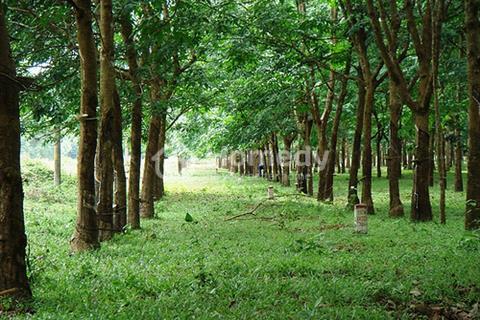 Đất mặt tiền 741 xã Thuận Lợi cần bán, phù hợp làm xưởng, nhà máy, giá 9,5 tỷ