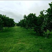 Bán 2 lô đất liền kề trồng cây ăn trái tại Khánh Nam, Khánh Vĩnh, thuận tiện đầu tư trang trại