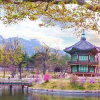 Tặng chuyến du lịch Hàn Quốc cho khách hàng may mắn đặt mua Nha Trang City Central trong tháng 8