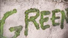 Quét hỗn hợp rêu và sữa chua lên tường, người phụ nữ khiến ai đi qua cũng trầm trồ vì quá kỳ diệu