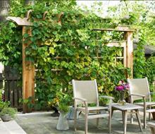 Thiết kế và thi công sân vườn