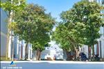 Dự án Khu đô thị Trường Sơn Homes Nghệ An - ảnh tổng quan - 3
