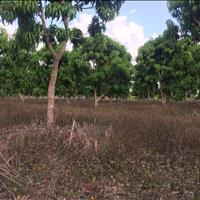 Bán vườn xoài Úc rộng 10566m2 ở xã Suối Cát, huyện Cam Lâm