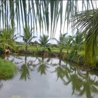 Vườn dừa duy nhất xã Trung An - Củ Chi, giá rẻ nhất khu vực, 2370m2, giá 3,2 tỷ