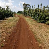 4.000m2 đất trồng cây lâu năm sổ đỏ, đường 7m, thổ cư 400m2, dân đông, Di Linh, Lâm Đồng