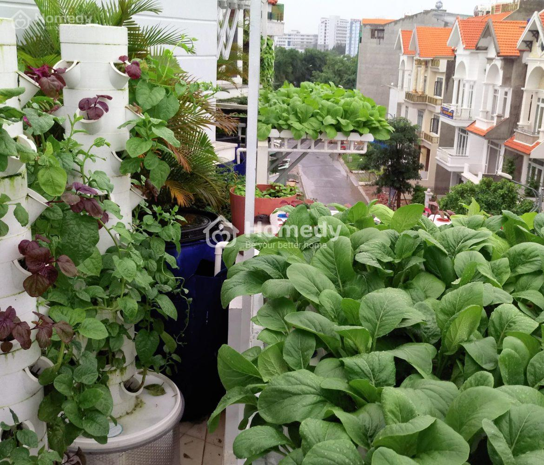 cách trồng rau sạch tại nhà