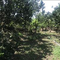 Bán đất vườn bưởi xã An Phước, huyện Châu Thành