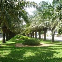 Cho thuê căn hộ 2 phòng ngủ – 2WC, 66 m2 full nội thất Saigon Mia, giá 16 triệu/tháng