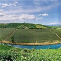 Đất nền Bảo Lộc giá lúa non - 399 triệu/nền/125m2 - pháp lý rõ ràng - sổ riêng từng nền
