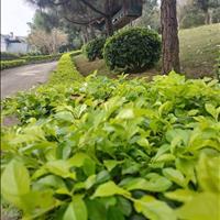 Bán đất Xanh Villas, Lucky Hill, Phú Cát City - Thạch Thất, 8tr/m2, khu Công Nghệ Cao, làng Đại Học