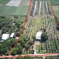 Đất vườn trái cây, bằng phẳng, đang thu hoạch