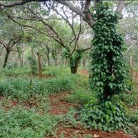 Bán đất vườn điều 4.4ha tại Phú Sơn, Bù Đăng, Bình Phước