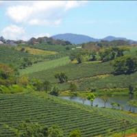 Chính chủ bán lô đất nền biệt thự Đam Bri view hồ, đồi chè, rừng thông thơ mộng gía chỉ 3xx triệu