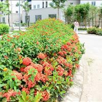 Nhận hồ sơ nhà ở xã hội Bamboo Garden City, chỉ từ 480tr/căn, nhận nhà ở ngay
