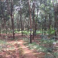 Bán đất cao su có điện 3 pha nằm ngay đường DT760, Bù Đăng, Bình Phước
