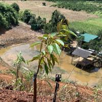 Trang trại sinh thái Lâm Nguyên, Lâm Đồng chỉ 600 triệu/4000m2 đất và vườn sầu riêng