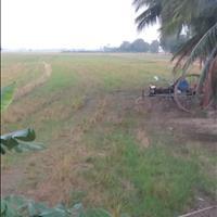 Bán đất nông nghiệp tại ấp Bưng Ràm, Hưng Điền B, Tân Hưng, Long An, giá đầu tư