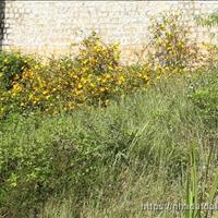 Bán đất đẹp giá rẻ tại khu quy hoạch An Sơn, Phường 4, Đà Lạt