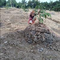 Cần bán gấp đất nông nghiệp tại xã Sơn Định, Chợ Lách, Bến Tre, giá đầu tư