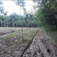 Cần bán miếng đất Chánh Phú Hòa, Bến Cát, Bình Dương, 5750m2 có cao su giá 2 tỷ