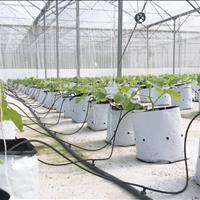 Bán trang trại rau sạch 10000m2 (1 hecta) Hòa Vang
