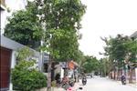 Khu dân cư Tấn Trường - ảnh tổng quan - 9