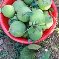 Bán vườn cây ăn trái thuộc ấp Tân Triều, xã Tân Bình, Vĩnh Cửu