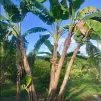 Bán hơn 1 hecta vườn cây ăn trái đủ loại thuộc Thị trấn Vĩnh An, Vĩnh Cửu
