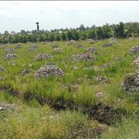 Chính chủ bán gấp 12 công đất tại Hậu Mỹ Trinh, Cái Bè, mặt tiền sông, giá rẻ 230 triệu/công