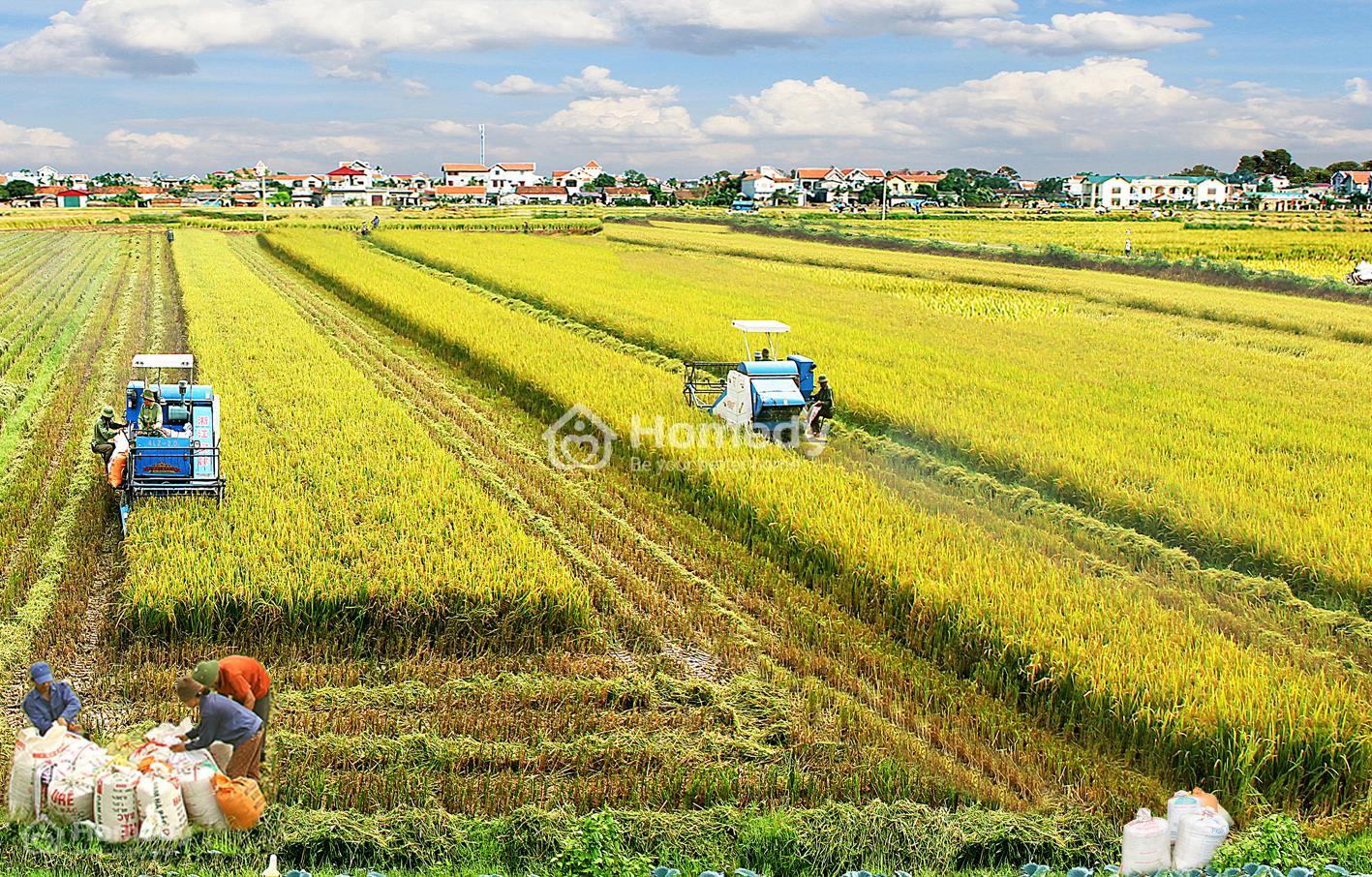 Đất công ích là gì? Xin giao đất công ích để sản xuất nông nghiệp được không?