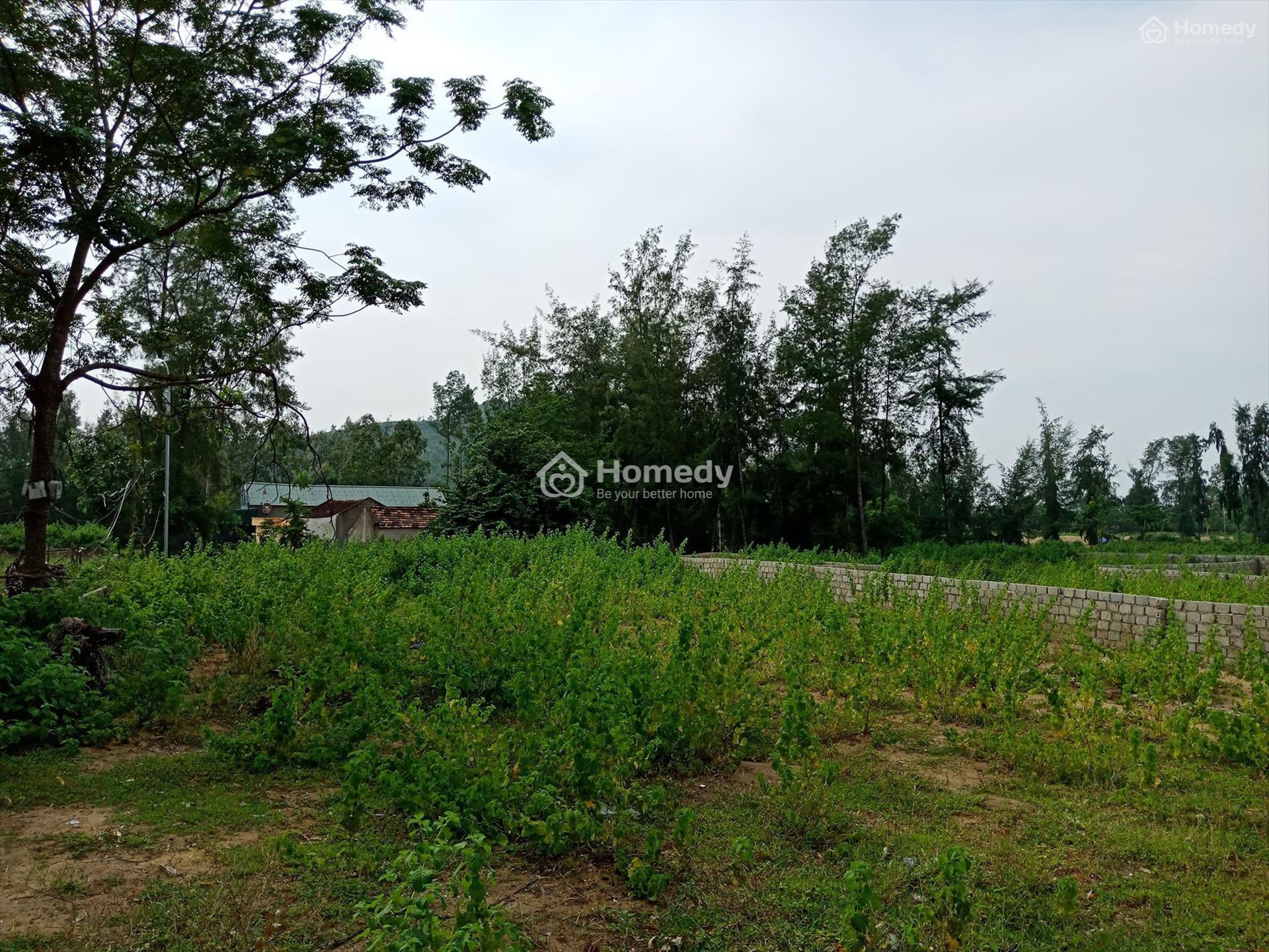 Đất trồng cây lâu năm là gì? Có được phép xây nhà?