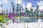 Dự án Khu đô thị River Silk City - Sông Xanh - ảnh tổng quan - 13