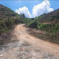 4,2 ha đất cây lâu năm, diện tích thực tế hơn đường đá 4m