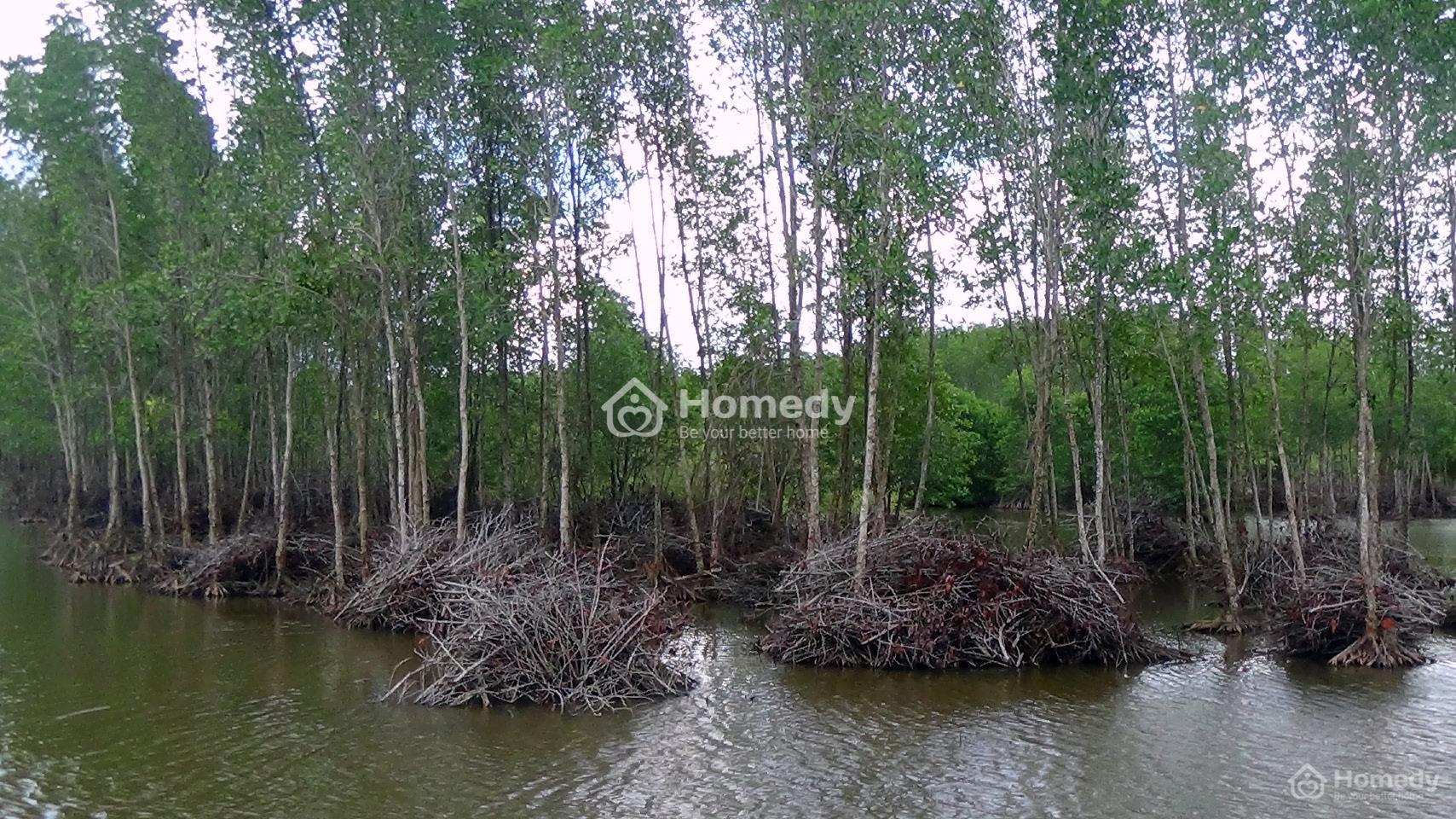 Rừng phòng hộ bảo vệ môi trường sinh thái