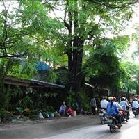 Mặt phố Hoàng Hoa Thám, 50m2, mặt tiền 4m, mặt phố kinh doanh giá 10 tỷ (thương lượng)