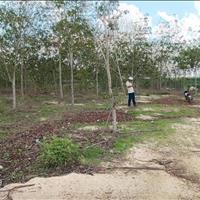 Bán đất 12000m2 đất mẫu xã Tân Bình thị xã La Gi giá rẻ