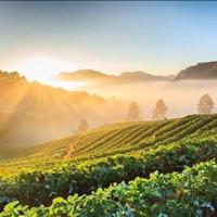 La Beaute' Bảo Lộc chiết khấu lên đến 5%, 160m2 full thổ cư