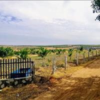 Sở hữu ngay đất trồng cây Bình Thuận giá rẻ chỉ 50 nghìn/m2 sổ đỏ sang tên ngay