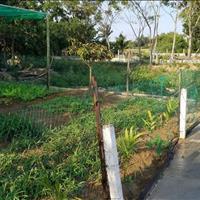 Bán đất diện tích 1230,9m2 đất ở view cánh đồng nhà vườn tuyệt đẹp Hòa Khương, Hòa Vang, Đà Nẵng