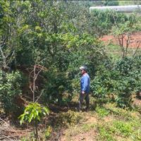 Bán đất vườn Xuân Trường, Đà Lạt, Lâm Đồng, 120m2 mặt tiền đường
