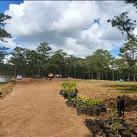 Bán đất làm du lịch, nông trại ở Đạ Nhim, Lâm Đồng, ô tô vào tận nơi